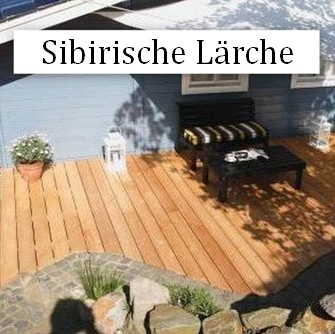 Sibirische Larche